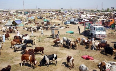 Farmer-Herdmen Clash Has Displaced More Persons In Nigeria Than Boko Haram In First Half Of 2019