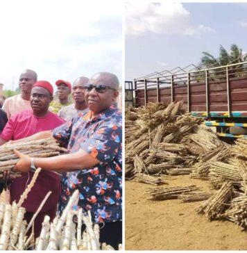 Anambra Lawmaker Distributes Cassava Stems To Constituents (Photos)